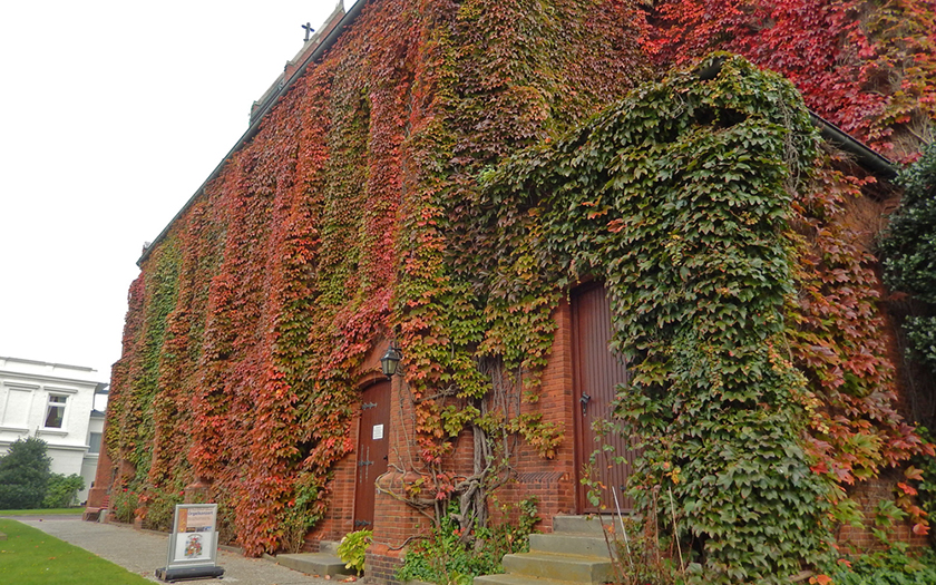Die Kirchenfassade ist mit großflächig mit Wein bewachsen