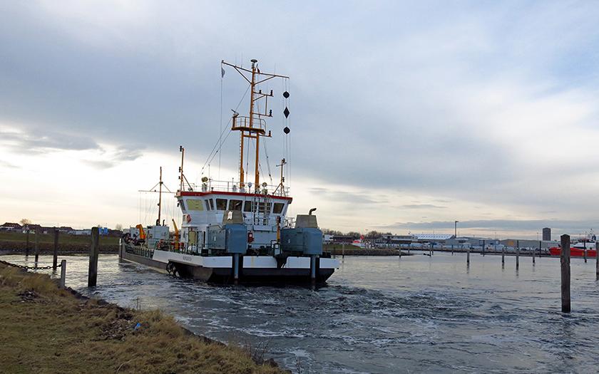 Die Seekrabbe beseitigt den Schlick im Hafen