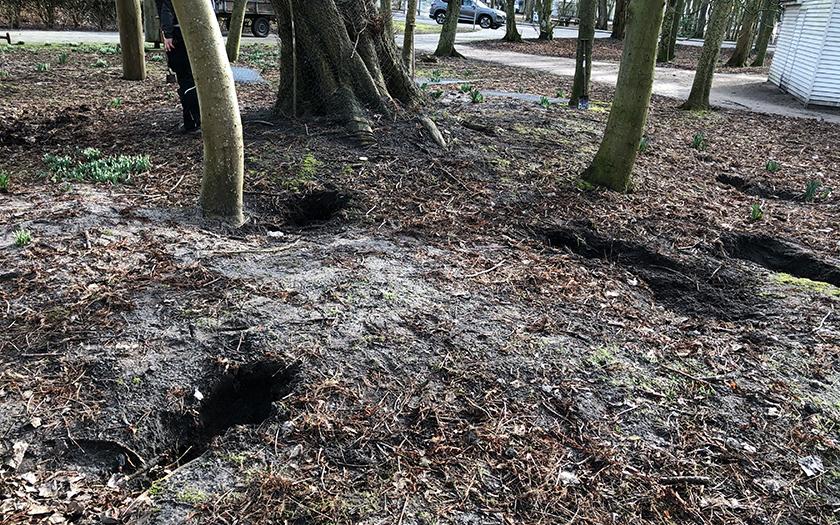 Zahlreiche Kaninchenlöcher sind im Bereich der Ulme zu finden