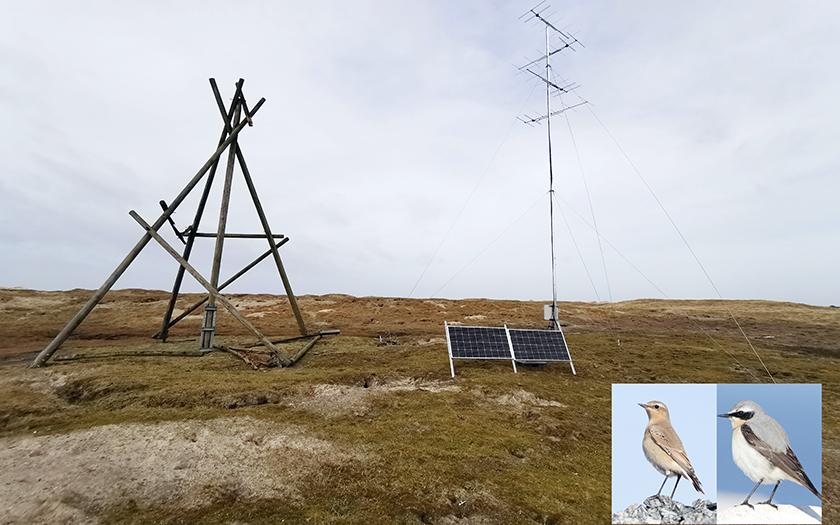 Sie Antenne empfängt die Radiosignale der Vögel