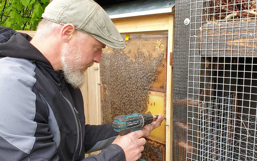 Bienen ziehen ins Insektenhotel ein