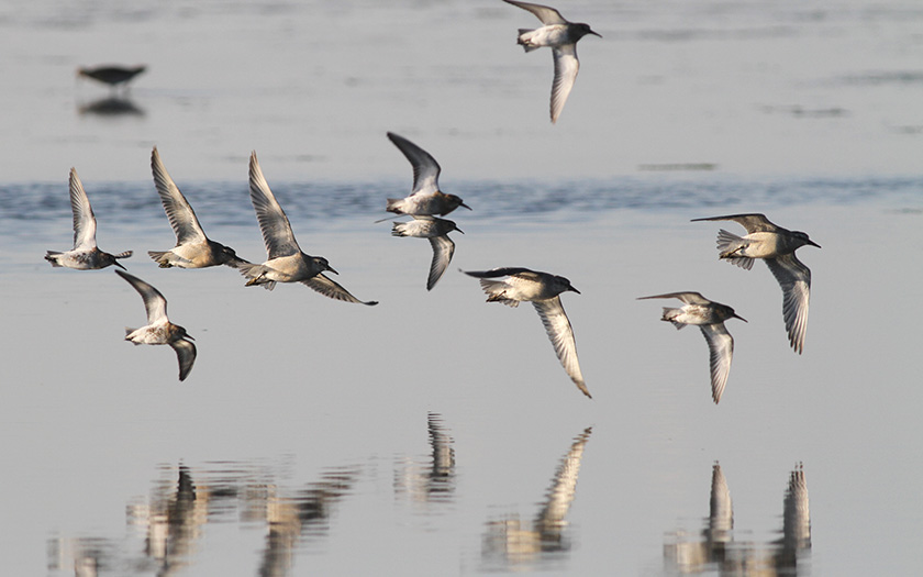 Zugvögel im Anflug